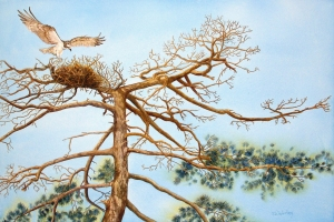 Donna-Winterling-osprey-nest-1